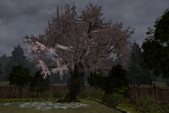 Cherry-Tree-3