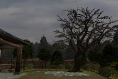 Cherry-Tree-5