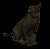351-Cat-black