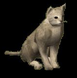 353-Cat-white