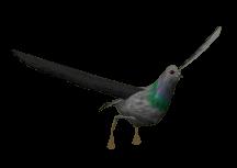 358-Pigeon