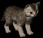 63-Kitten